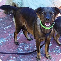 Adopt A Pet :: Linda - Hollywood, FL