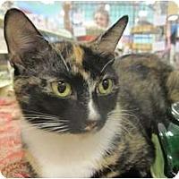 Adopt A Pet :: Mama Nima - The Colony, TX