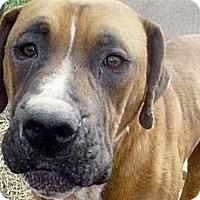 Adopt A Pet :: Dylan - Moulton, AL