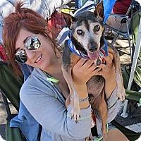 Adopt A Pet :: Loofie - Scottsdale, AZ
