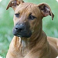 Adopt A Pet :: Becca - Providence, RI