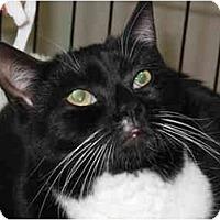 Adopt A Pet :: Mischief - Port Republic, MD