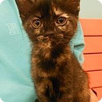 Adopt A Pet :: Grace - Reston, VA