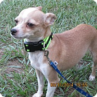 Adopt A Pet :: Peta - Orange Park, FL