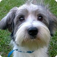 Adopt A Pet :: Pilot#1M - Orlando, FL