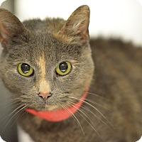 Adopt A Pet :: Pootie (foster care) - Philadelphia, PA