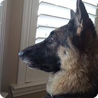 Adopt A Pet :: Niya - Houston, TX