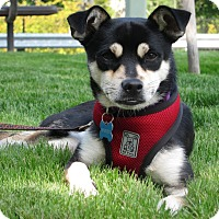 Adopt A Pet :: Pete - Adoption Pending - Gig Harbor, WA