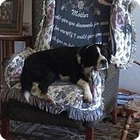 Adopt A Pet :: Jack - Lodi, CA