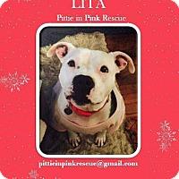 Adopt A Pet :: Lita - nashville, TN