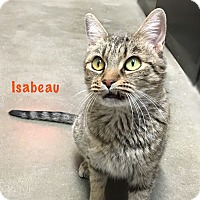 Adopt A Pet :: Isabeau - Foothill Ranch, CA