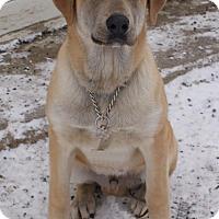 Adopt A Pet :: Munchie - Prosser, WA