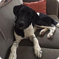 Adopt A Pet :: Dexter - Willingboro, NJ