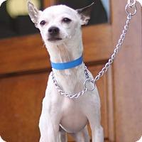 Adopt A Pet :: Paco - Waldorf, MD