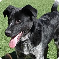 Adopt A Pet :: PORTHOS - Hurricane, UT