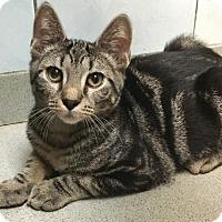 Adopt A Pet :: Alex (Manhattan) - New York, NY