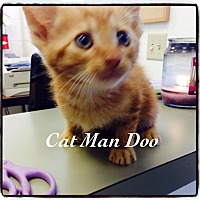 Adopt A Pet :: Cat Man Doo - Dillon, SC