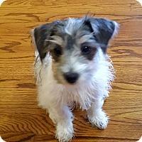 Adopt A Pet :: Dali - Knoxville, TN