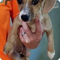 Adopt A Pet :: Stella - Ellaville, GA