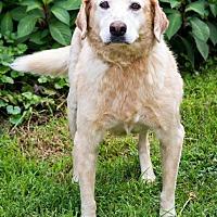 Adopt A Pet :: Jarrett - Enfield, CT