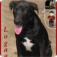 Adopt A Pet :: Logan-Soft Mouth! - Marlborough, MA
