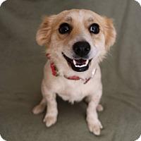 Adopt A Pet :: Smiles - Yucaipa, CA