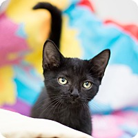 Adopt A Pet :: Quinn - Fountain Hills, AZ