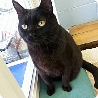 Adopt A Pet :: Ebony - Shinnston, WV