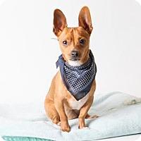 Adopt A Pet :: *PUCK - Sacramento, CA