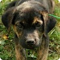 Adopt A Pet :: Boo - Brattleboro, VT