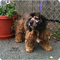 Adopt A Pet :: Trent - Tacoma, WA