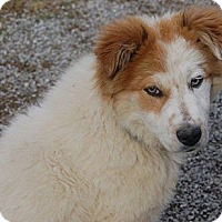 Adopt A Pet :: Eula Prison Obedience Trained - Hazard, KY