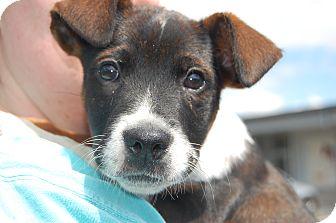 Adopt a puppy harrisburg pa