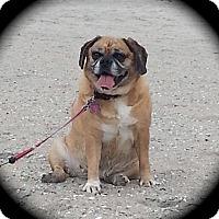 Adopt A Pet :: Jada - Mount Laurel, NJ