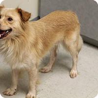 Adopt A Pet :: Dollar - Hartford, VT