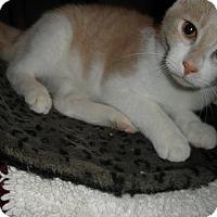 Adopt A Pet :: Zircon - Milwaukee, WI