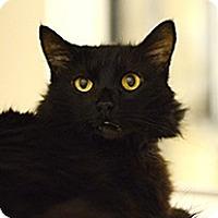 Adopt A Pet :: Sierra - Novato, CA