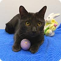 Adopt A Pet :: AA Banjo - McCormick, SC