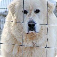Adopt A Pet :: Lizzy in VA - pending - Beacon, NY