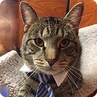 Adopt A Pet :: Natick - Long Beach, NY