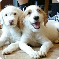 Adopt A Pet :: Glacier - Yucaipa, CA