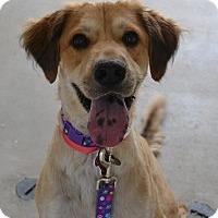Adopt A Pet :: Gunny - Scottsdale, AZ
