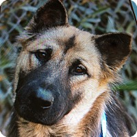 Adopt A Pet :: LOTTIE VON LOITZ - Los Angeles, CA