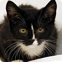Adopt A Pet :: Sonny - Newland, NC