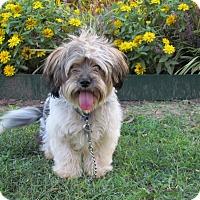 Adopt A Pet :: TOBY - Hartford, CT
