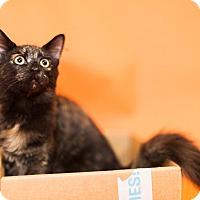 Adopt A Pet :: Kylee - Cincinnati, OH