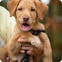 Adopt A Pet :: Honey - Meridian, MS