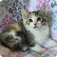 Adopt A Pet :: Cruella de Vil - Tampa, FL