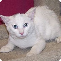 Adopt A Pet :: K-Emery5-Mariam - Colorado Springs, CO