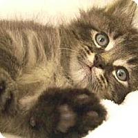 Adopt A Pet :: Pacer & Porsha - Arlington, VA